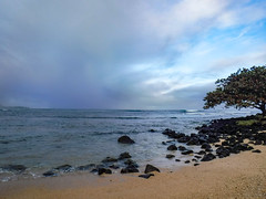 Kauai: Morning Run with Kinner (Sujal Parikh) Tags: december 2016 kauai morning kinner hanalei walkingjogging miles hotel beach regis