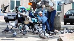 Birds II (Monika&Marek) Tags: poland feedingthebirds motherandchild torun doves