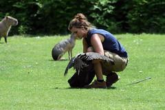 Pflegerin mit Greifvogel