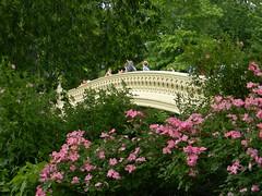 Bow Bridge (Muhammad I.A.R. Dulymamode) Tags: bridge flowers centralpark parks bowbridge