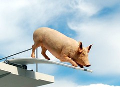the brave pig is still undecided