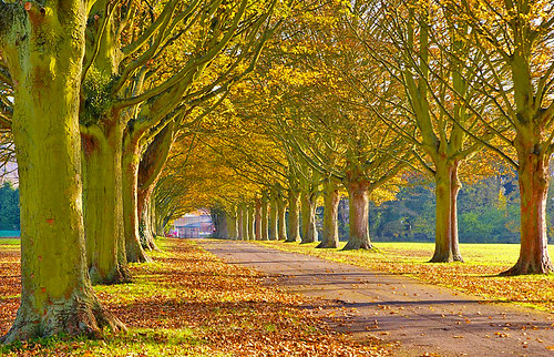 Autumn's going  --   in the Avenue