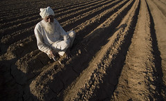Indian Farmer Working in Newly Sowed Potato Fields. (Captain Suresh Sharma) Tags: asia india punjab panjab oldman man white attire field agriculture manual working labour hardwork tool beard pattern lines freshlyploughed soil panjabi punjabi sikh conventionalagriculture digging onjob potato potatosowing trowel agricultureappliance indianagriculturalmanualimplements indianconventionalagriculturalimplements