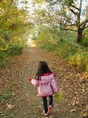 秋の旧東金街道(青葉の森公園)