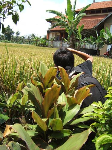 sprawling paddy fields, crouching Marcus