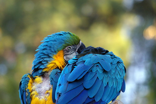 Parrots taken with pentax da 50-200