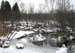 Spring In January? (ann j p) Tags: snow canada ice water marsh saultstemarie northernontario naturesfinest januarythaw golddragon mywinners
