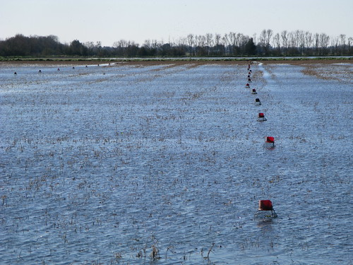 Crawfish pots in paddy fields near Mamou, Louisiana, USA
