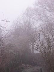 Wintery Morning Garden (happylobster) Tags: trees ice fog garden frost wintery