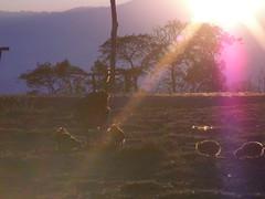 SANY0274 (marioambrosino) Tags: thailand mai chiang bai
