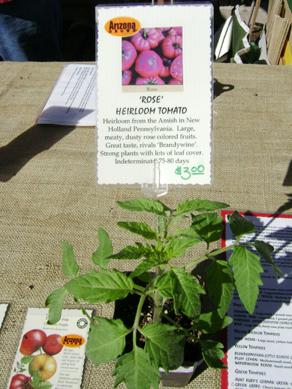 Dos Arbolitos, heriloom tomato plant