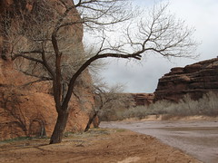 Canyon de Chelly (ojodorado) Tags: 2 arizona walk navajo longest canyondechelly dineh
