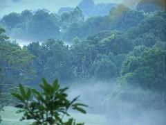 the forest awakes... (YAZMDG (15,000 images)) Tags: trees light plants mist tree green nature leaves forest landscape flora rainforest australia nsw habitat byronbay hinterland northernrivers rainbowregion goonengerry nswrfp lushhinterland yazminamicheledegaye northernriversspecies
