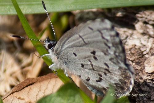 spring azure- (1 of 2)