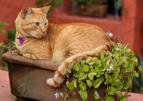 A Potted Cat
