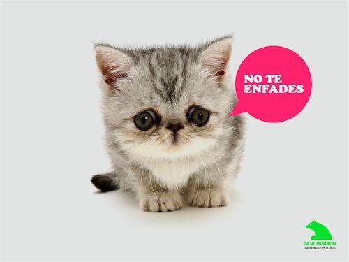 Anuncio de Caja Madrid, gatito bolindro