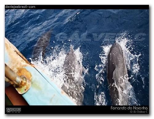 ¿dónde se pueden ver delfines en Brasil?