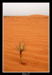 Alone (Salem_photos) Tags: plant alone desert