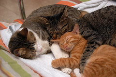 A big happy family (Happyrose Garden) Tags: orange cat kitty spot mimi kissablekat bestofcats happyrose camfjan08