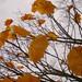 Orange umbrellas in a tree