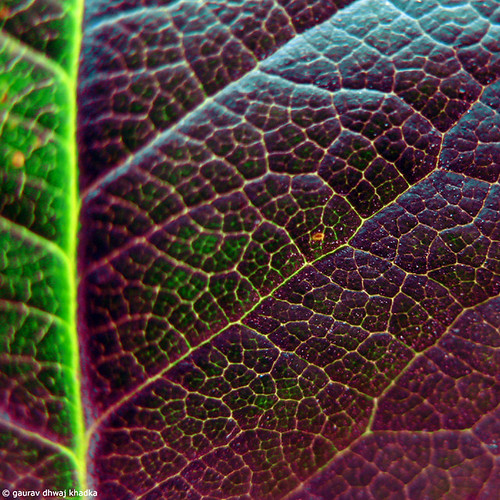 The dark side of the leaf….by Gaurav Dhwaj Khadka