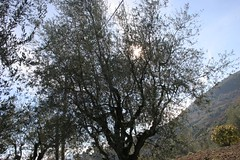 olivier taill 1