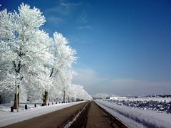 Air Hoar Frost 2008-02-07 (Hammer51012) Tags: road blue trees winter sky white snow ice geotagged frost hoarfrost cellphone iowa cherokee lg8300 airhoarfrost