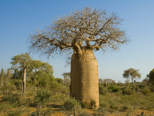 Africa Salvaje Sabana Africana