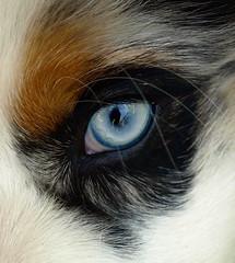 Puppy Dog Eye (jhhwild) Tags: dog eye puppy fur frame django fill