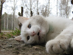 sad sight of the dead (ilexxx) Tags: pet cats pets white animal animals cat fur dead death kitten kitty atrest bung