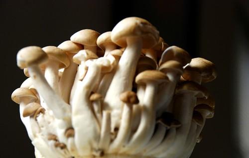 beech mushroom