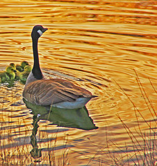On Golden Pond (mikenpo) Tags: soe blueribbonwinner platinumphoto anawesomeshot superbmasterpiece excellentphotographerawards platinumheartaward theperfectphotographer natureselegantshot