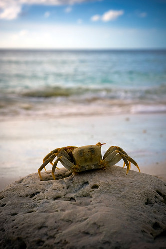 A crab dreams of distant shores - Diego Garcia