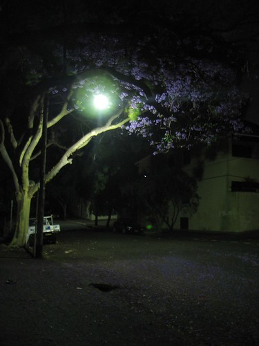 Jacaranda by streetlight