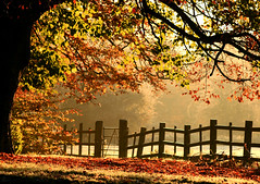 Autumn Morning at Caldicot Castle Park (-terry-) Tags: autumn colour tree fall wales fence flickr explore monmouthshire caldicotcastle flickrexplore caldicot seeninexplore flickrchallengewinner