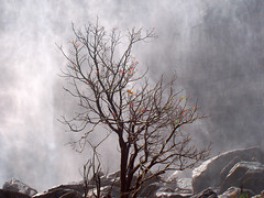 Tree and Mist (shaji sarasan) Tags: mist tree kerala falls waterfalls thrissur athirappilly diamondclassphotographer