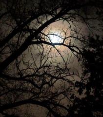 Moon Shadow (Eric P. Olson) Tags: shadow moon tree night outdoors shadows michigan fullmoon warren nightsky utata:project=nocturnal2