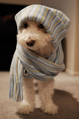 chilly puppy
