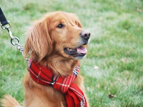 Reindog 19: Preppy Puppy!
