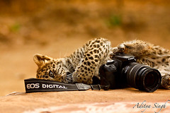 Canon as wildlife sees it - 3 (dickysingh) Tags: india cute nature canon eos funny o