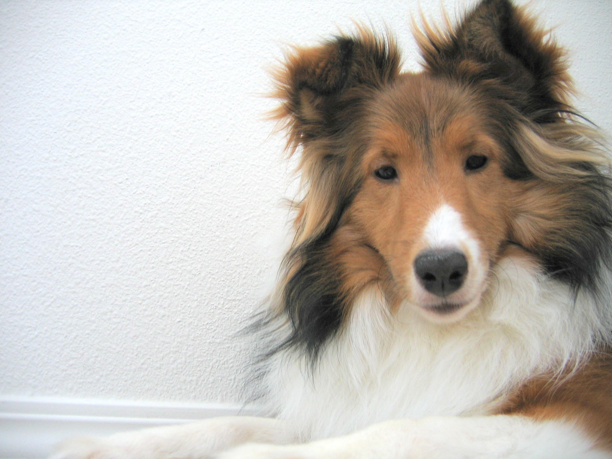 tratamiento narural de la epilepsia en perro