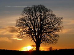 Sunset (madbesl) Tags: sunset tree picturesque soe naturesfinest fpc bigmomma blueribbonwinner supershot outstandingshots 35faves passionphotography fineartphotos golddragon mywinners abigfave platinumphoto aplusphoto ultimateshot irresistiblebeauty treesubject diamondclassphotographer flickrdiamond excellentphotographerawards flickrelite theunforgettablepictures photofaceoffwinner photofaceoffplatinum platinumheartaward betterthangood theperfectphotographer thegardenofzen pfogold thegoldendreams worldwidelandscapes flickrestrellas iamflickr thebestofday gnneniyisi llovemypic natureselegantshots spiritofphotography quarzoespecial kartpostalpostcard june08pfobrackets naturescreations saariysqualitypictures platinumbestshot platinumpeaceaward aboveandbeyondlevel4 aboveandbeyondlevel1 aboveandbeyondlevel2 aboveandbeyondlevel3