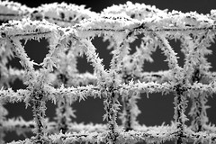 Icy (seven years) Tags: bw white snow black cold ice geometric fence germany frost pattern icy freiburg