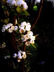White (Elanorya) Tags: natura fiori terra bianco nero luce aria scuro contrasto oscurit impressedbeauty