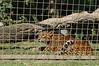 DSC_0628 (sener_tr) Tags: travel vacation animal zoo photo feline europa europe leopard photograph animales animaux animali tier dyr gezi avrupa hayvan seyahat bahçesi turkishphotographer hayvanat zwierzat kedigil kedigiller zvirat animalsk dierlijke elainten animaliskt