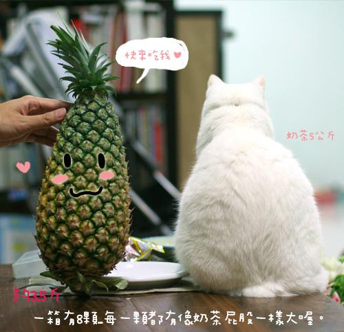 20080513鳳梨_003
