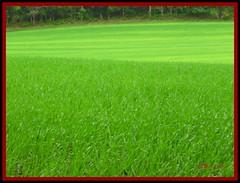 Campo (el Buho n30) Tags: cc galicia galiza campo campos hierba herba elbuhon30