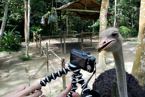 Camera Eater