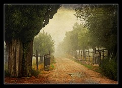 ~ The Vanishing Road ~ (*Marta) Tags: road autumn fall texture fog landscape bravo foggy nebbia autunno countryroad justimagine vanishingroad theunforgettablepictures goldenvisions