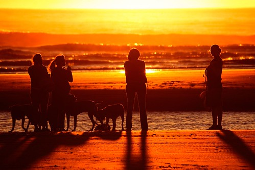 Women and their Dogs at Sunset